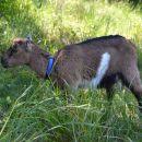 Kora na ranču