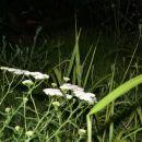 Ranč travnik