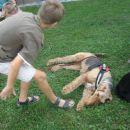 Brez strahu pred psom