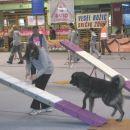 3.12.2006 Sara in Ron (Paris) na agillity tekmi v Postojni.