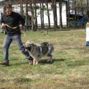 Prikaz gibanja psa na razstavi-Bojan in Brina