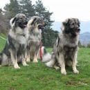 Še enkrat Dena , Daša in Čajka (iz leve)