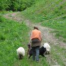 Lepa, umirjena pot na Pohorje. Idealen sprehod za pse.