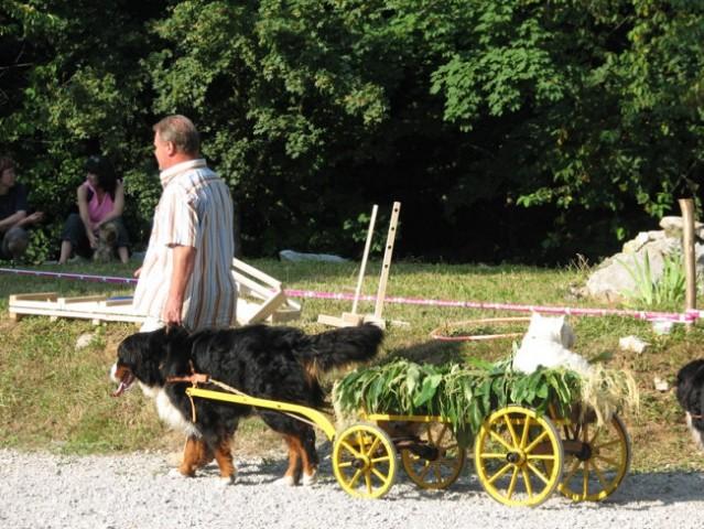 Piknik KO in revije Moj pes ter radia Zeleni  - foto