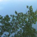 Odsev veje v ribniku-MB park