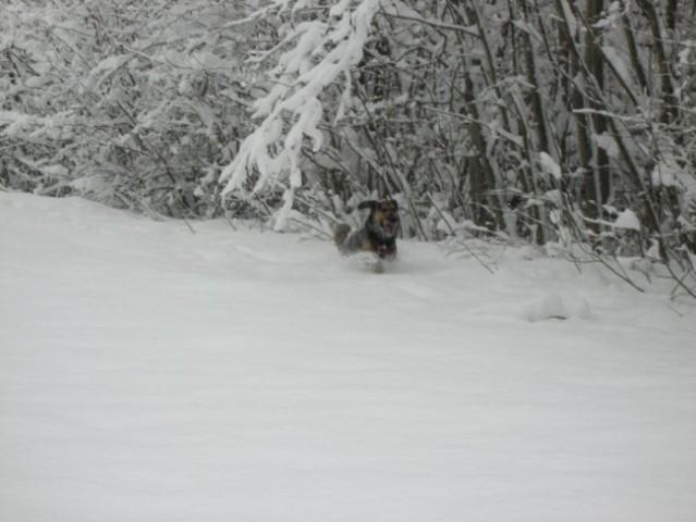 Bucko na snegu - foto