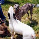 Tilly z Omiko in Tyro