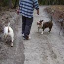Pasja druščina na sprehodu
