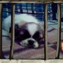 zapornica