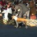 CACIB (jan 2005)