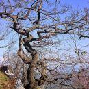 Ne da se to drevo snegu in vetru. Ko bi le bili vsi ljudje tako vstrajni