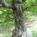 le na kaj spominja to drevo . . .?