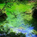 v vodi zeleno in modri odsev