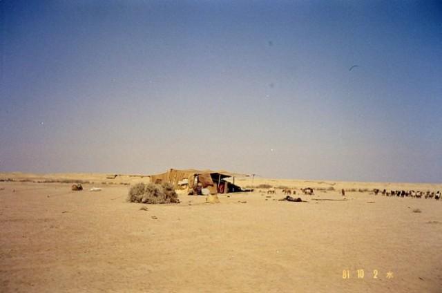 Nomadski šotor. Ko živali popasejo kar je zelenega, se preselijo drugam.
