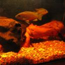 Akvarij mali35l