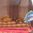 zaspane!!!