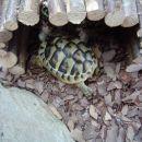Moje Kopenske Želvice