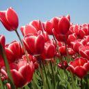 modro-rdeče-zeleno ali pa nebo-cvetovi-listje