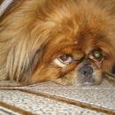 my dogy;)