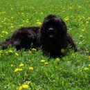 Aurica, kolk je trava čudovit kraj za odmor