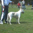 Bosco na vzrejnem pregledu DOMZALE 1.4.2006