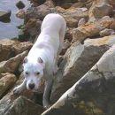 Bosco na morju ***Kukljica***