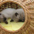 ...spančkava...