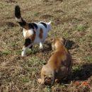 Zalezovanje mačke Pike (vedno, ko je na obzorju)