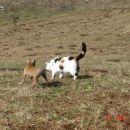 Zalezovanje mačke