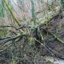 ... do zvrnjenega drevesa, ki nam privošči nekaj telovadbe. Najlažje je iti mimo po levi s
