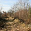 Pot gre ravno po hrbtu mimo brezovega gozda.