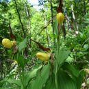 Začasno smo se oddaljili od Idrijce in se povzpeli do prekrasnih cvetlic.