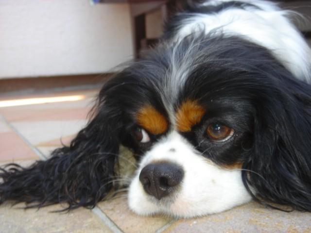 Kavalirka Iris na obisku (20.7.2006) - foto