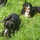 Lenny in njen soimenjak v Bohinju (15.8.2006)