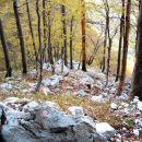 ...in se skozi gozd pomikamo previdno navzgor...