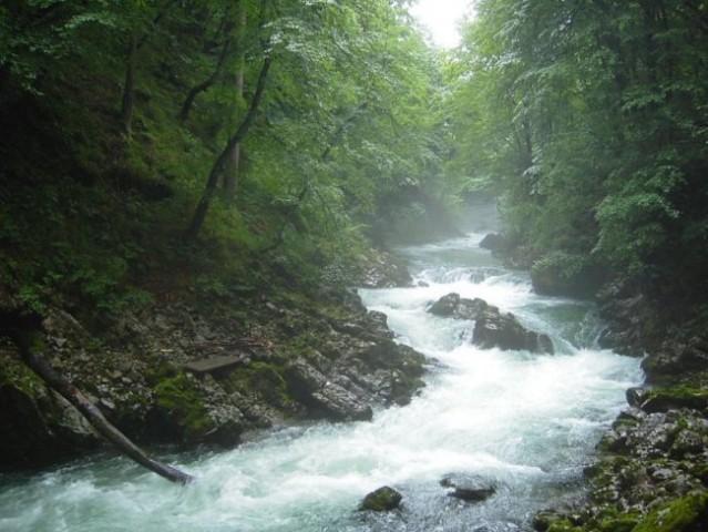 Blejski Vintgar 2005 - foto