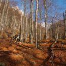 Pot precej časa vodi skozi gozd. Jesenske barve so bile tokrat že na tleh.