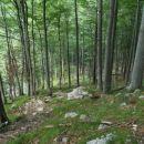 Strmo skozi gozd...