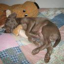 Najraje spim s kužkom pri Nini na postelji, čeprav pravi, da ne smem.