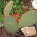 Najbolj priden kaktus letos