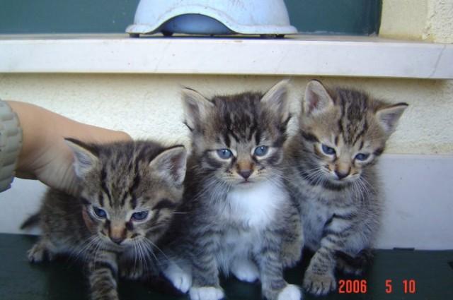 Svi tri na okupu
