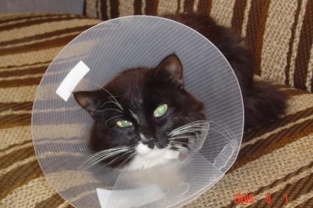 Lina kada smo je sterilizirali