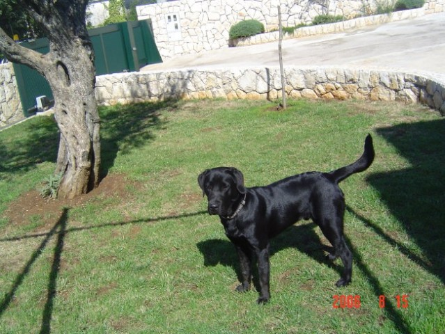 Http://balto.moj-album.com/ - foto