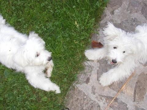 Brata Bučko & Chilli