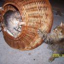 Eskimčica in Čupi prvi poskusi skupne igre