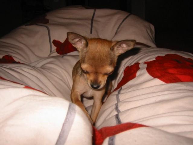 Cista zmaga, noben ne ve, da sem na postelji.