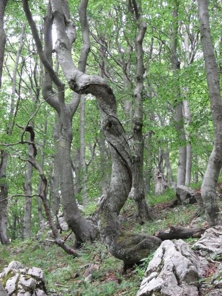 Nenavadno drevo