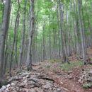 pot po hladnem gozdu