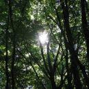 prebijanje sonca skozi gosto drevje