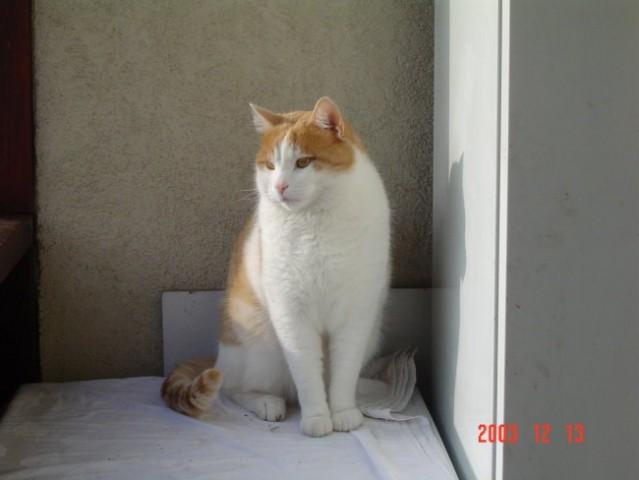 Rudi - foto